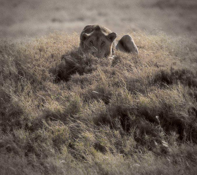 leeuw van Anne-Marie Vermaat