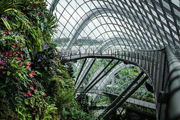 Singapore Cloud Forest, natuur ontmoet architectuur! van Jesper Boot
