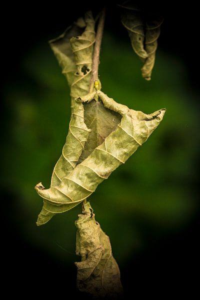 Dead leaves van Marianne Rouwendal