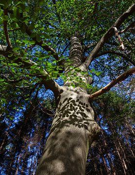 Boom met schaduwen in het bos van Nel Diepstraten