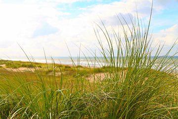 duinenpannetje aan zee van Micky Bish