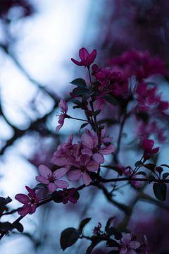 Blüte von Marieke Tegenbosch