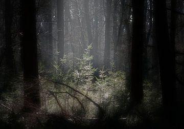 open spot in a wood von Henk Speksnijder