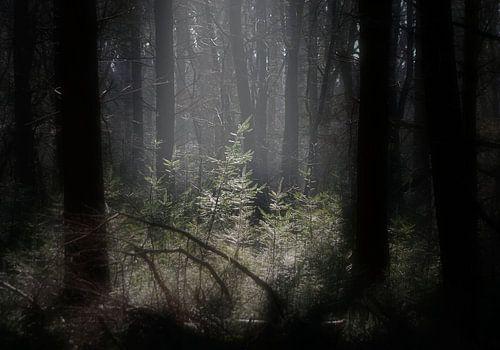open plek in het bos van