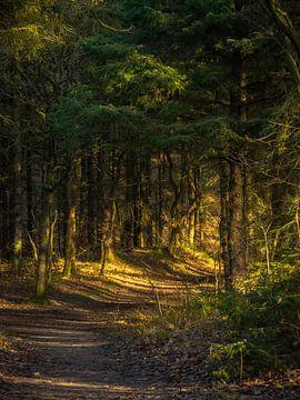 Ein Waldweg zur Sonne