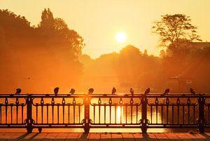 Gouden duiven op de brug