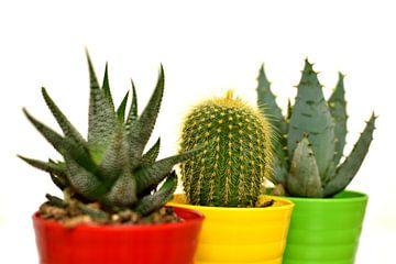 Aloe und Kaktee von Philipp Klassen