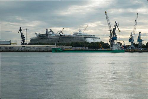 Oasis of the seas renovatie