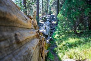 Sequoia National Park van Ton Tolboom