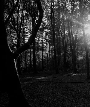 door de bomen het licht zien von Petra Vermunt