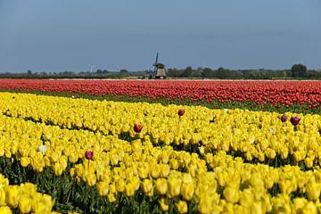 Nederlands plaatje met tulpen en een molen van Renzo de Jonge