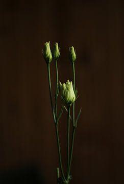 Ein Zweig mit Rosen von Pim van der Horst