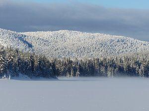 Winterbos Noorwegen van