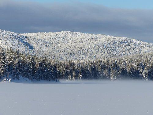 Winterbos Noorwegen