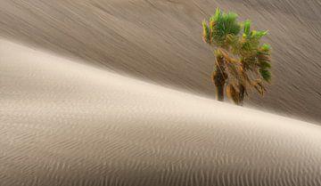 0280 Windy desert van Adrien Hendrickx