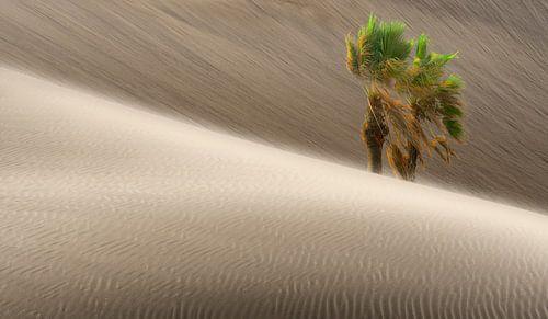 0280 Windy desert