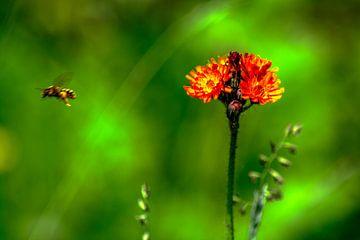 Flora ; Natur genießen von Michael Nägele