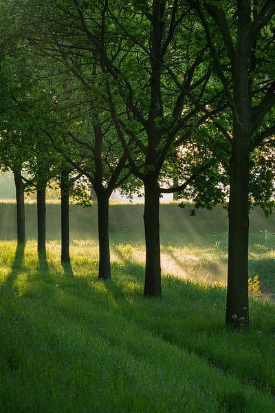 Eerst licht van Marcel Kerkhof