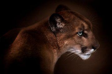 Puma, Doris Reindl van 1x