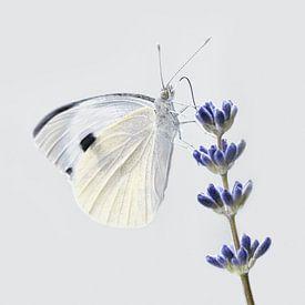 Vlinder wit van Violetta Honkisz