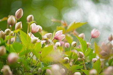 Frühling in meinem Garten von Hanneke Luit