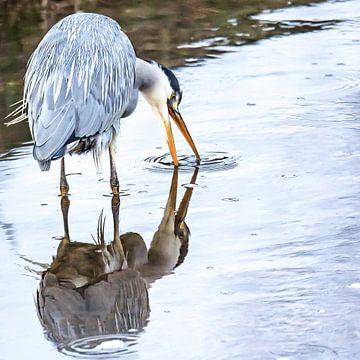 Blauwe reiger ziet zijn/haar spiegelbeeld van Fotografie Jeronimo