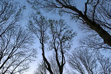 Bomenpracht bij schemering van BriGit Stokman