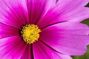 Roze bloem van Esther's Photos