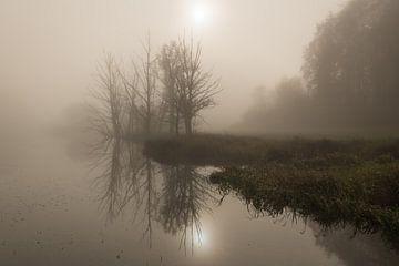 Bomen op de oever in de mist van Denis Feiner