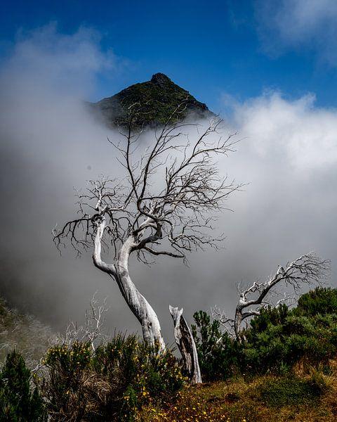 treetop sur Stefan Bauwens Photography