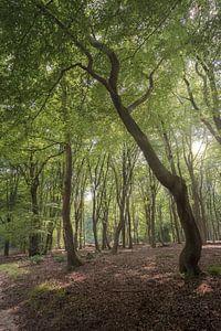 Tanzende Bäume von Marian van der Kallen Fotografie