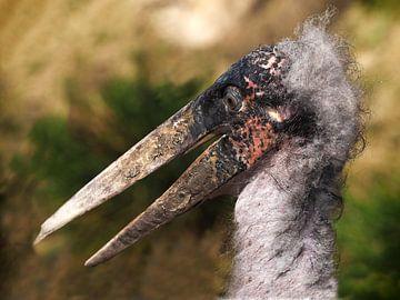 afrikanischer Marabu von Loek Lobel