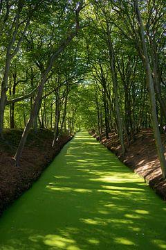 Groene rivier van Martijn Stoppels