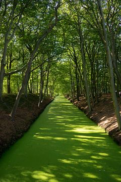 Grüner Fluss von Martijn Stoppels