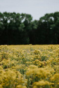 Ein Feld mit gelben Blumen von Jessica Arends