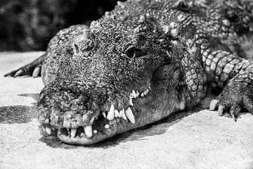 Krokodil/Alligator von Daphne Brouwer