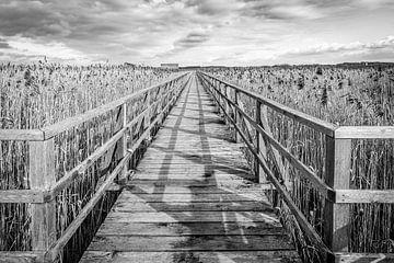 Bootssteg durch Schilf am Federsee von MindScape Photography