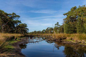 boslandschap von Patricia van Loock
