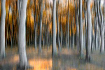 Spookbos van Sabine Wagner