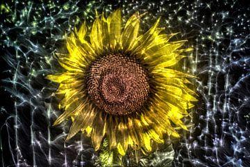 Kirlian veld van prachtige zonnebloemen van MPfoto71