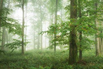 Grüner Wald im Nebel - Panorama von Tobias Luxberg