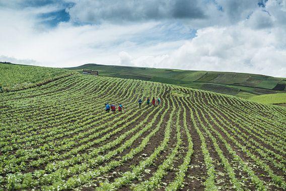 In the fields van Kevin Van Haesendonck