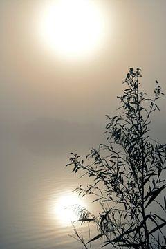 Mehr mit Pflanzen im Morgennebel bei aufgehender Sonne von Trinet Uzun