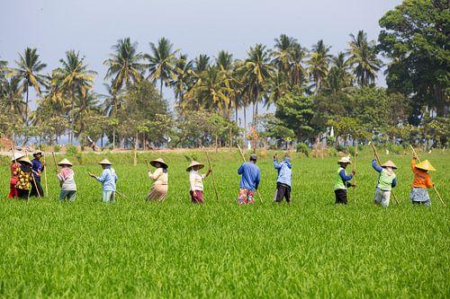 Werken in de rijstvelden op Lombok von Willem Vernes