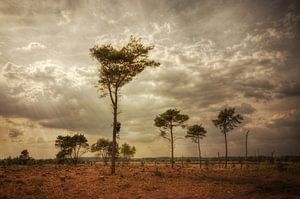 Landschap - Heide van