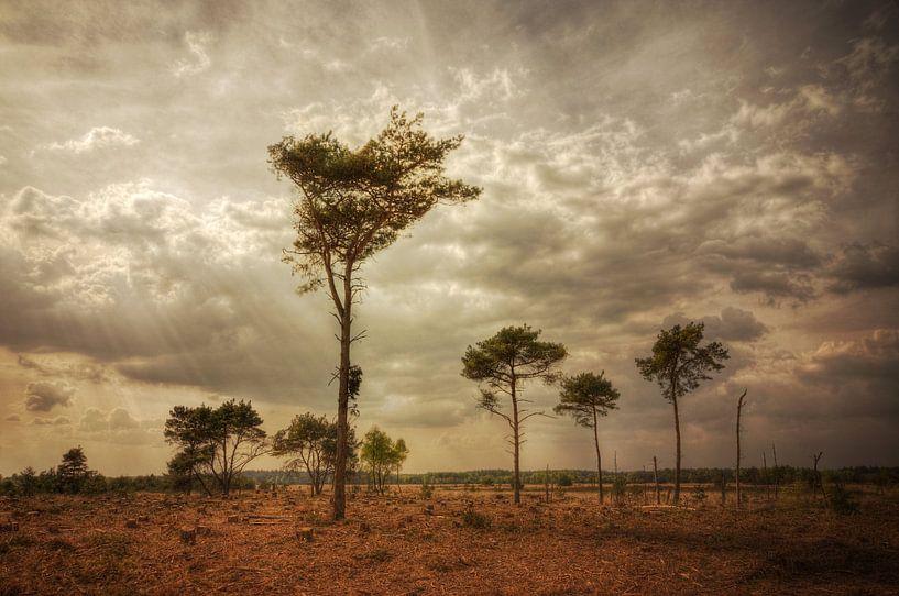 Landschap - Heide van Angelique Brunas