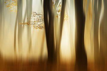 Herfst von Ingrid Van Damme fotografie