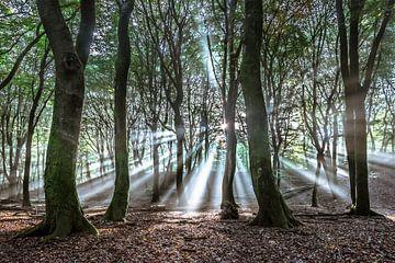 Sunrays van Niels Barto