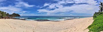 Traumhafter Strand mit Palme auf den Seychellen von MPfoto71