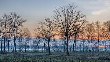 Morgenglühen von Stefanie van Dijk